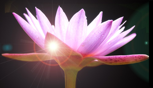 water lily flare